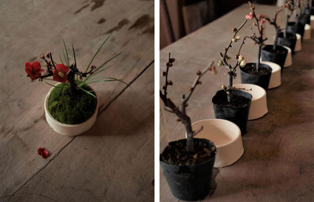 20170204_bonsai.jpg