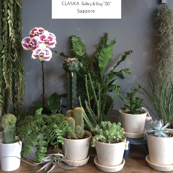 植物とうつわ flower Arne + さとうみちこ