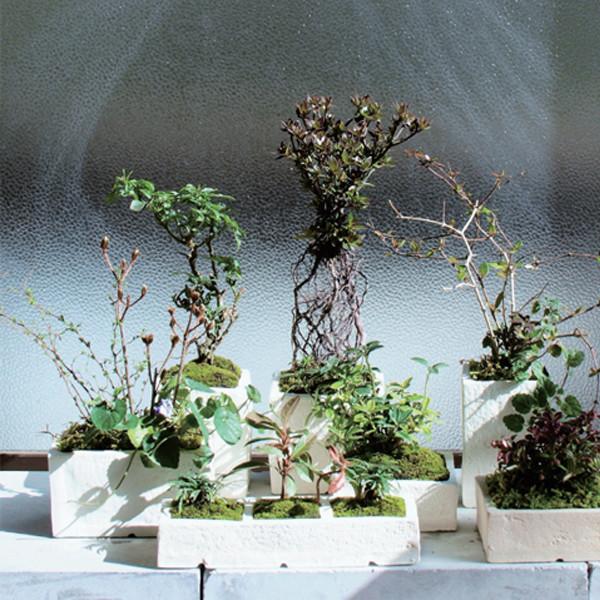 榊麻美植物研究所<br>芽吹きの植物展
