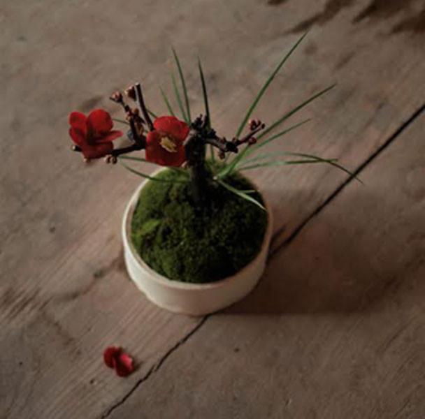 盆栽ワークショップ<br>早春の花木をしつらえる