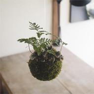 涼を感じる吊り苔玉ワークショップ