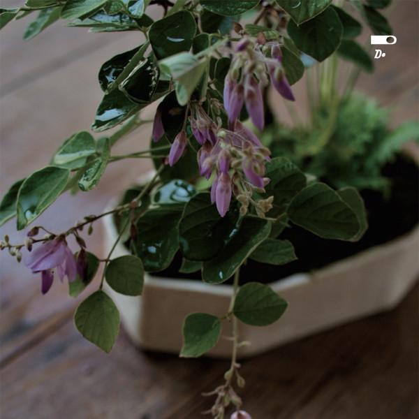 榊麻美植物研究所展<br>朝露宿る