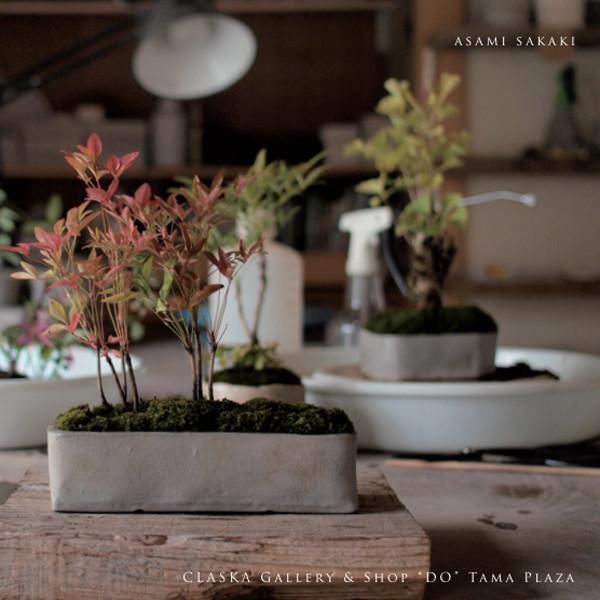 榊麻美植物研究所展<br>植物のある暮らし