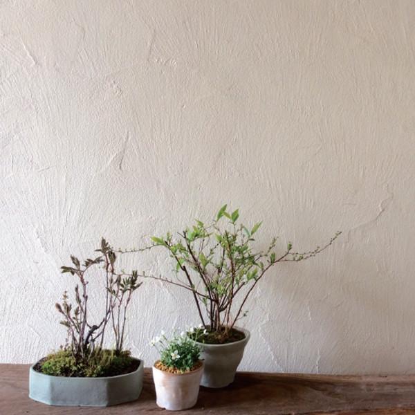 榊麻美植物研究所<br>感覚と植物