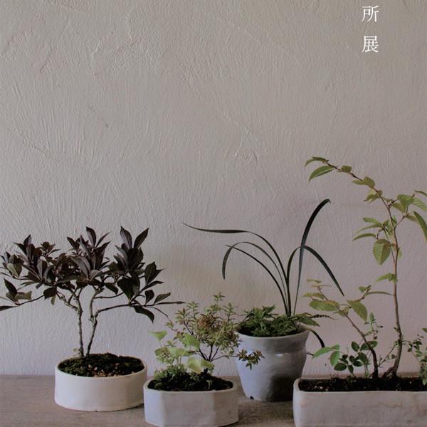 榊麻美植物研究所展<br>一葉知秋