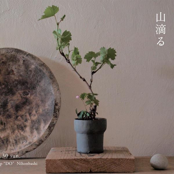 榊麻美植物研究所展<br>山滴る