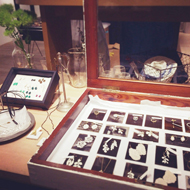 「New Collection 2014 PLANT / PLANT Jewelry Fair」はじまりました