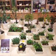 榊麻美植物研究所「芽吹きの植物展」