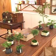 「榊麻美植物研究所展 ー 霜降 ー」開催中です。