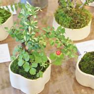 「榊麻美植物研究所展 -贈る-」開催中です。