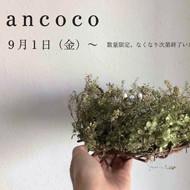 「ancoco」ドライフラワー作品のご紹介