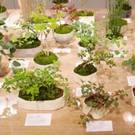 「榊麻美植物研究所展 朝露宿る」開催中