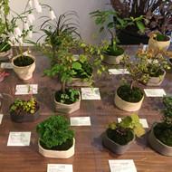 榊麻美植物研究所展「植物のある暮らし」開催中です。