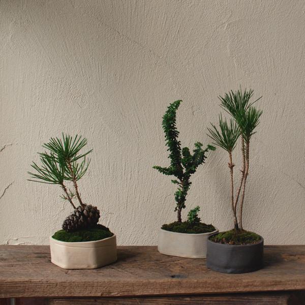 冬の盆栽ワークショップ