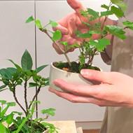 榊麻美植物研究所展「山滴る」