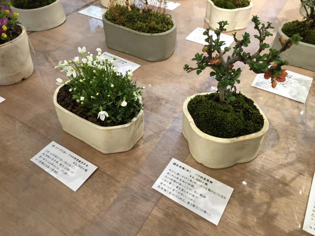 sakaki_2.jpg